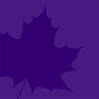 Spotlight story image pertaining to Purple leaf