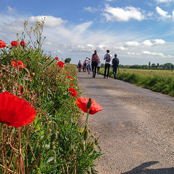 Spotlight story image pertaining to This is an image of a road with red poppies along the edge. Students can be seen in the distance.