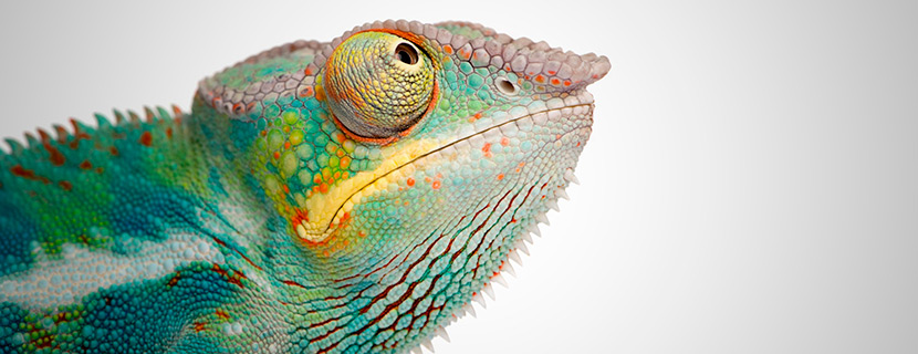 wellness chameleon